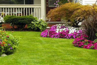 Manicured Spring Summer Residential yard