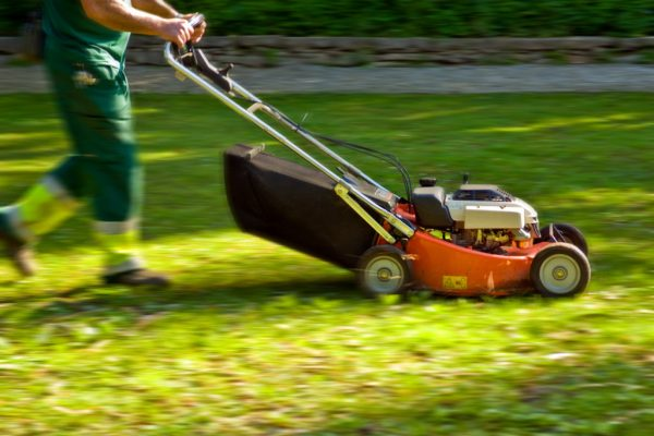 gardener with a mowing machine cutting the grass in a park